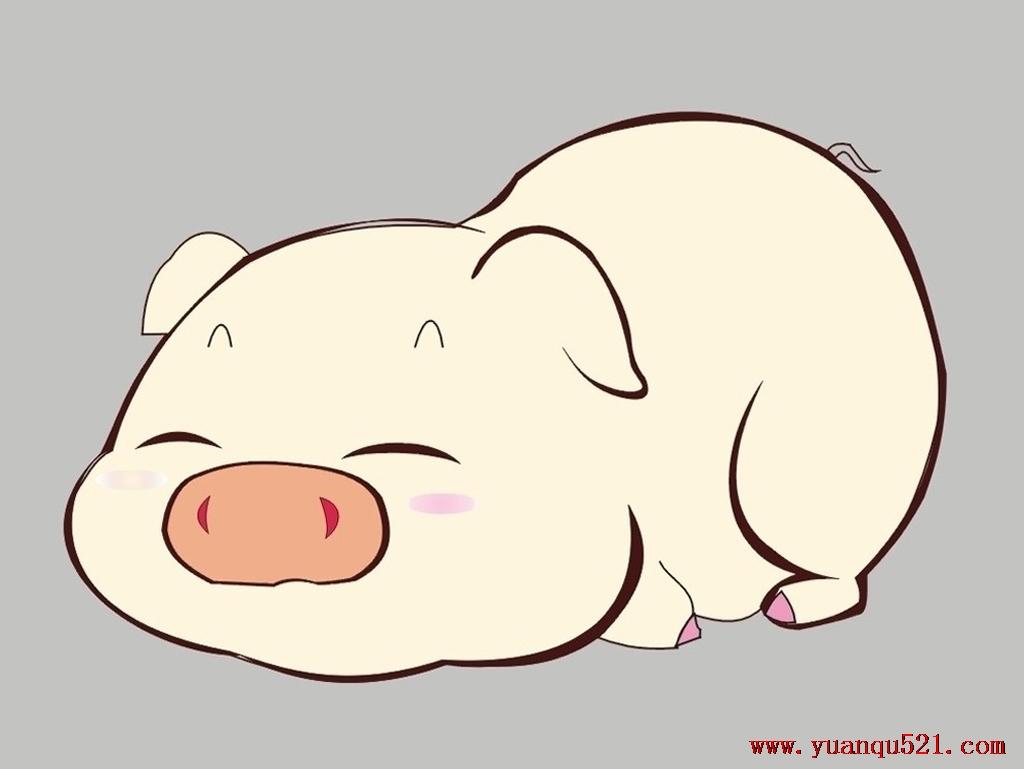 猪吃饭的图片可爱